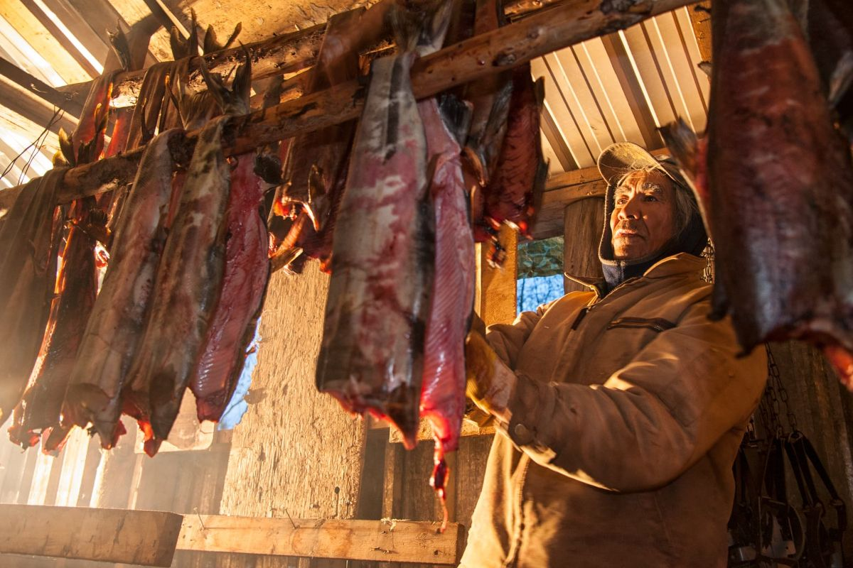 James Itsi hangs chum salmon for smoking in a shed in the self-governing Vuntut Gwitch'in First Nation community of Old Crow, Yukon.