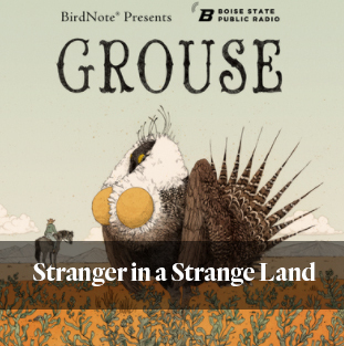 Grouse: a podcast about the most controversial bird in the West