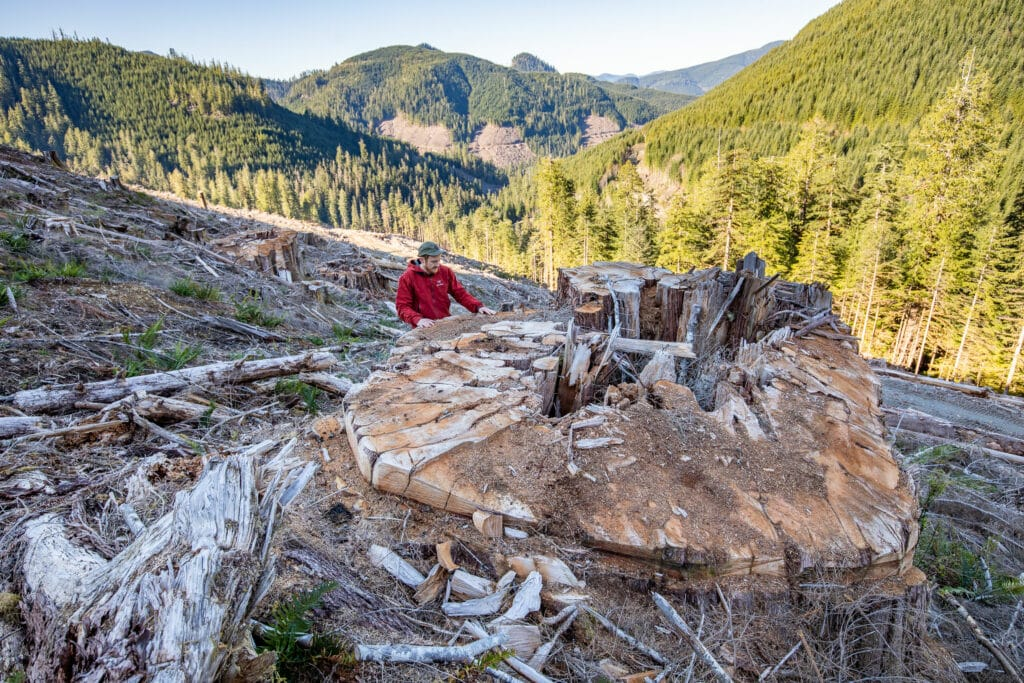 Photographer TJ Watt stands beside the stump of a giant old-growth cedar