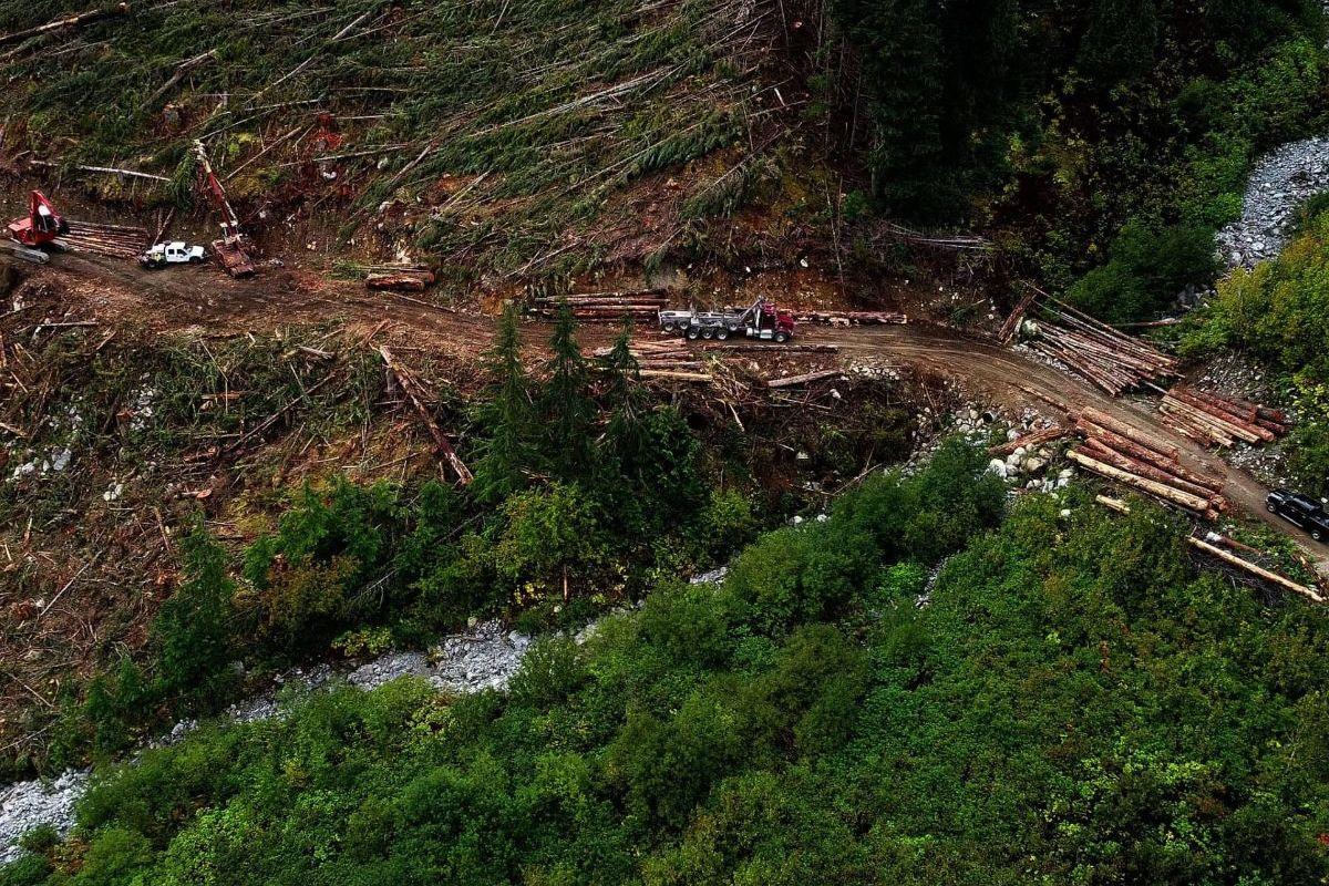 logging b.c. spuzzum valley