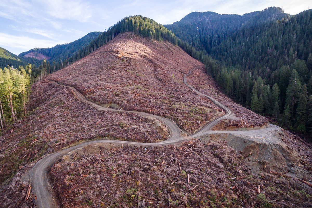 An aerial view of old-growth clearcut logging in the Caycuse watershed on Vancouver Island where blockaders are currently being arrested by the RCMP. Photo: TJ Watt