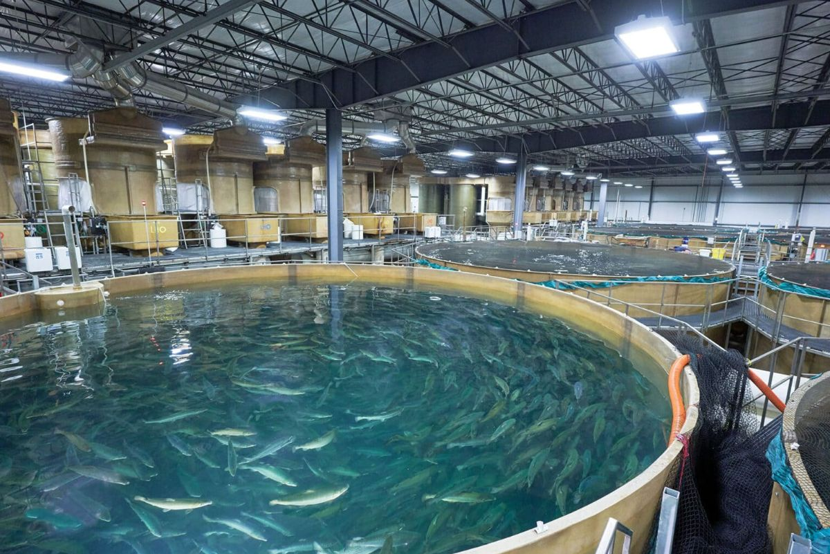 many large indoor tanks filled with fish