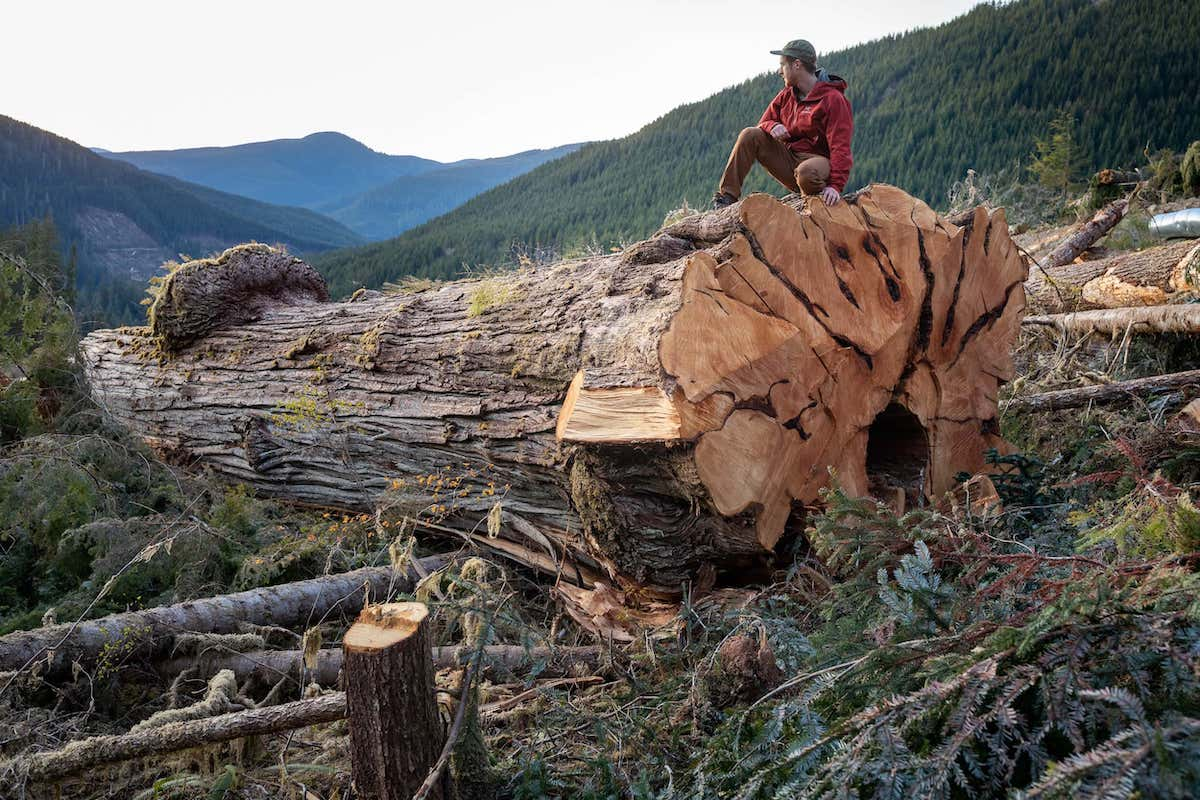 TJ Watt, co-founder of the Ancient Forest Alliance, crouches on an 800-year-old tree in the Caycuse watershed