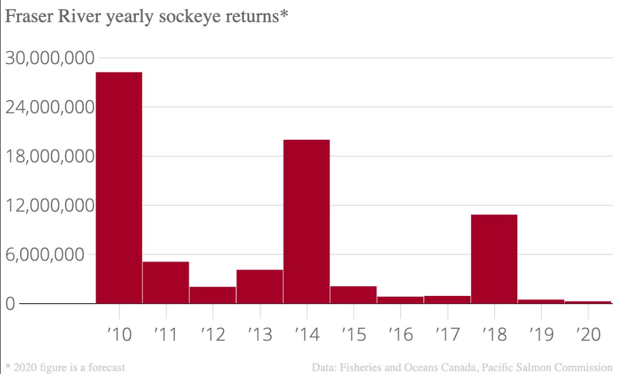 chart fraser sockeye returns