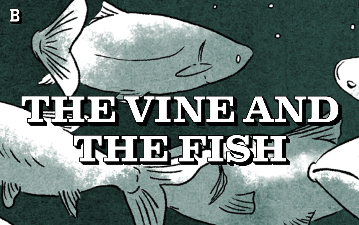 Believer magazine article: the vine and the fish