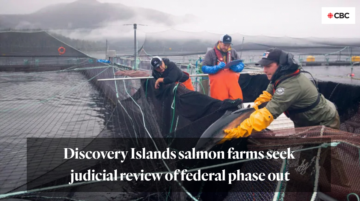 CBC story: Discovery Islands salmon farms seek judicial review of federal phase out