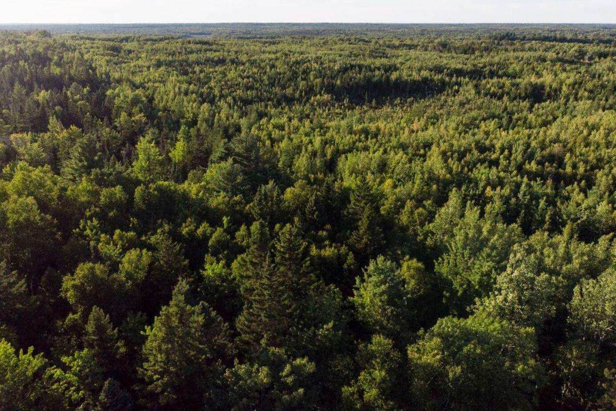Acadian forest woodlot in Douglas Harbour, N.B.