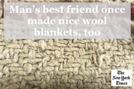 New York Times breeding dogs wool blankets