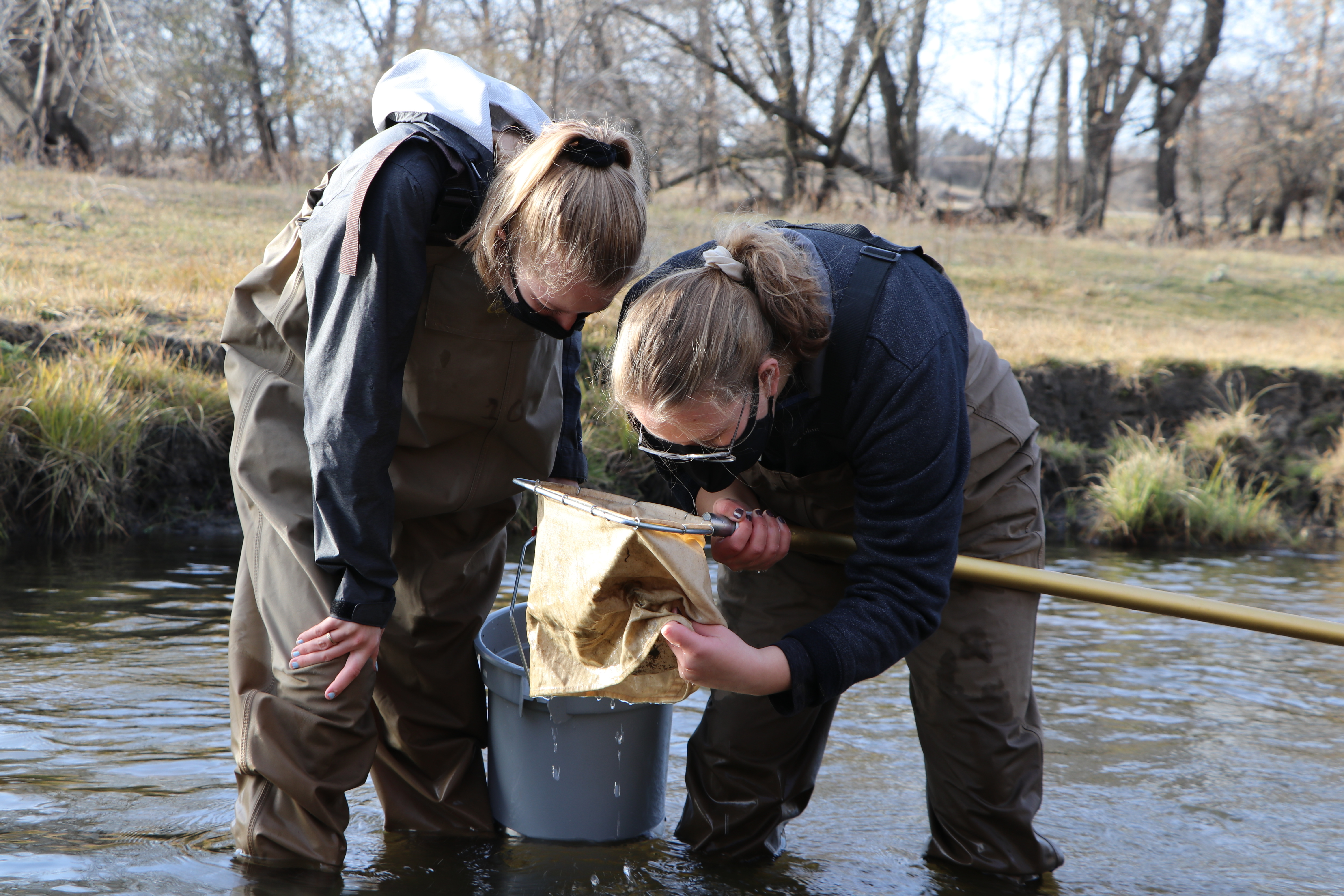 Two high-school aged students wearing masks and chest waders bend over a kick net to examine its contents.