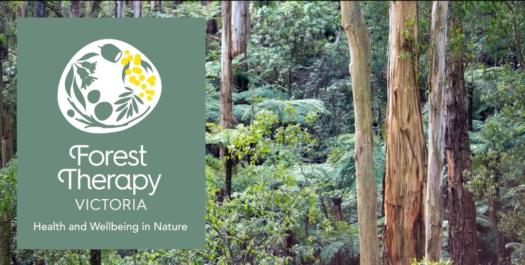 Forest therapy logo with a forest background