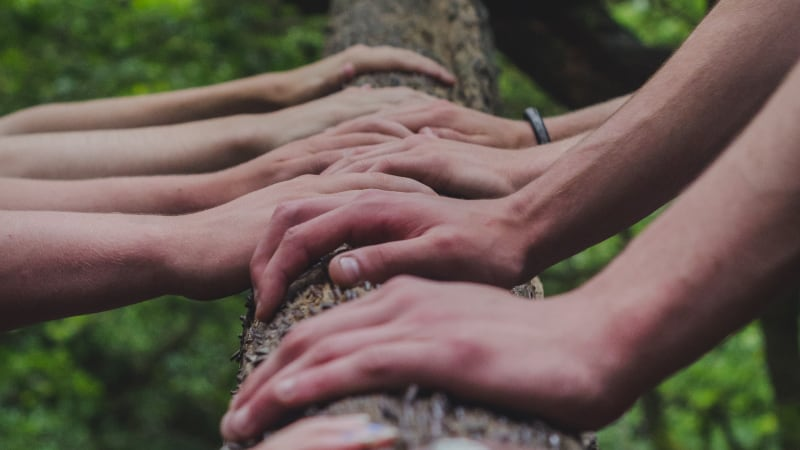 4 pairs of hands placed on the trunk of a tree