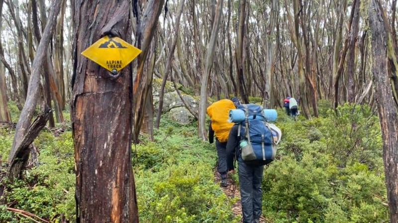 3 people with blue and yellow packs on their backs walking in bush