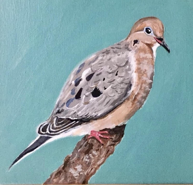 A painting of a Mourning Dove by Kayla Krenitsky.