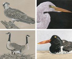 Some examples of Shannon's bird artwork