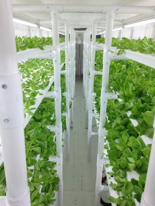 Hydroponics In Shipping Container