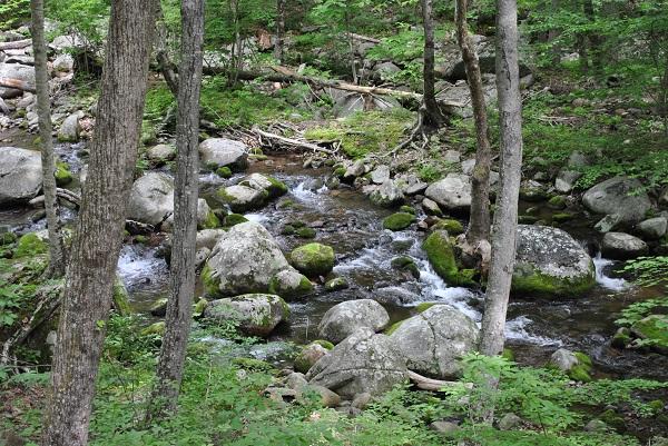 Hiking Trail Shenandoah National Park
