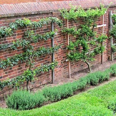 Training a Fruit Tree