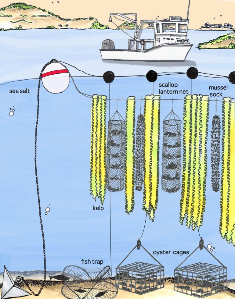 3D Vertical Ocean Farming