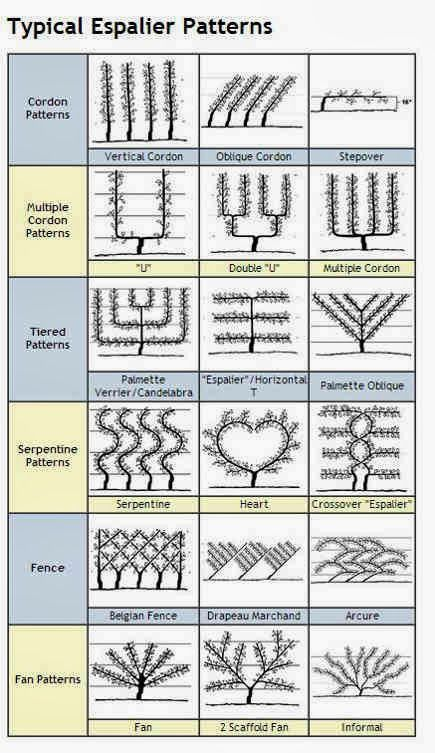 Espalier, Decorative and Functional