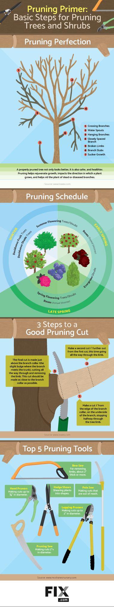 Pruning Primer