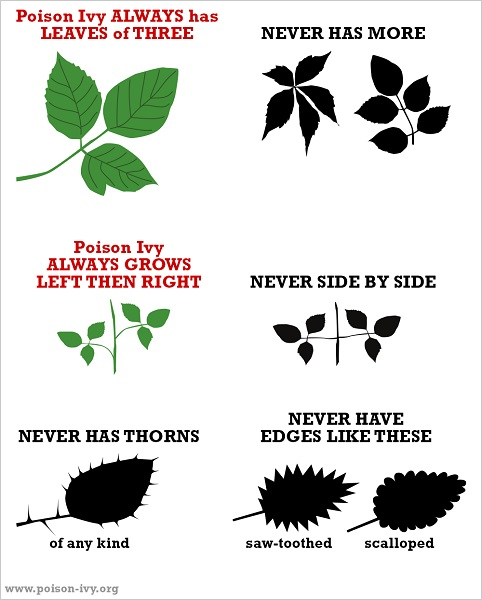 Poison Ivy Traits