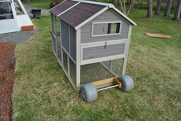 Chicken Coop - Rear