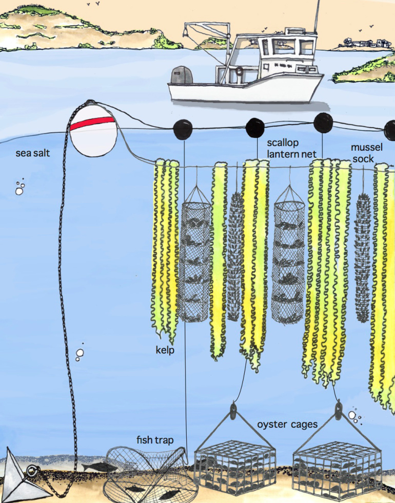 3D Vertical Ocean Farming