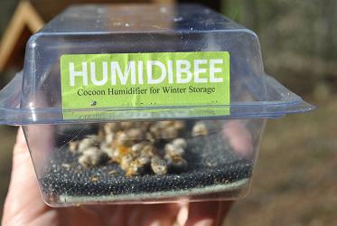Humidibee