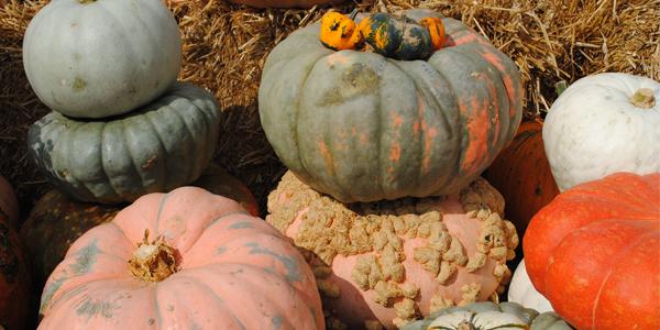 Variations in Pumpkins