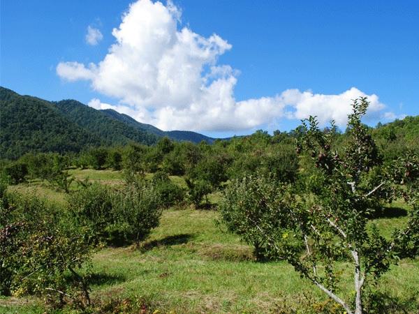Graves Mountain Apple Orchard