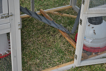 Chicken Coop - Side Entrance