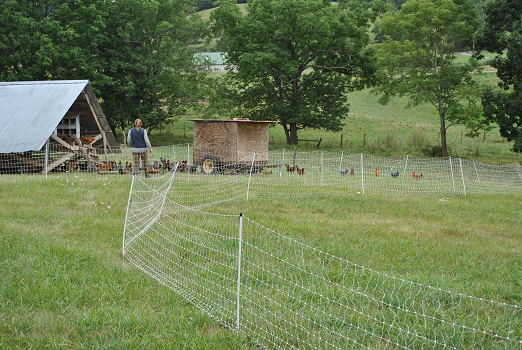 Electric Poultry Fencing - Polyface Farm