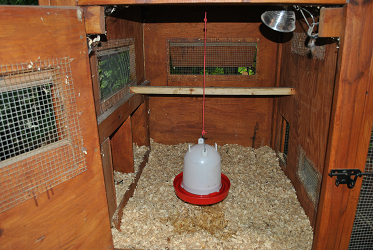 Stationary Chicken Coop Inside