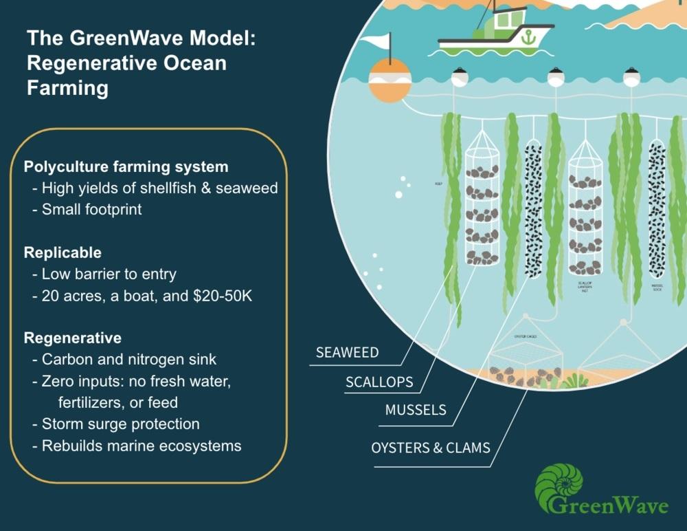 Regenerative Ocean Farming