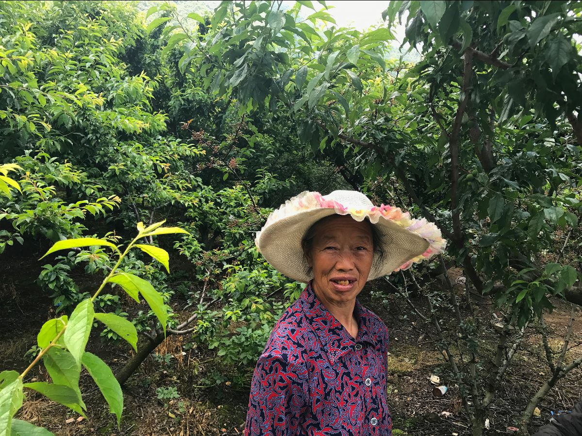Qingxi Sichuan pepper farmer