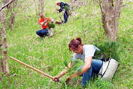 Tree planters wanted