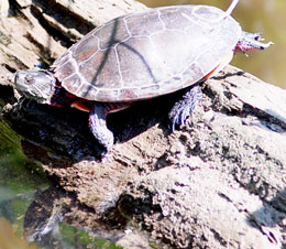World Turtle Day is coming!