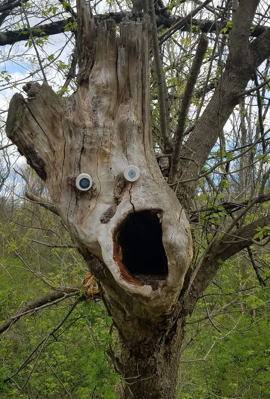 Google eyes on tree in forest