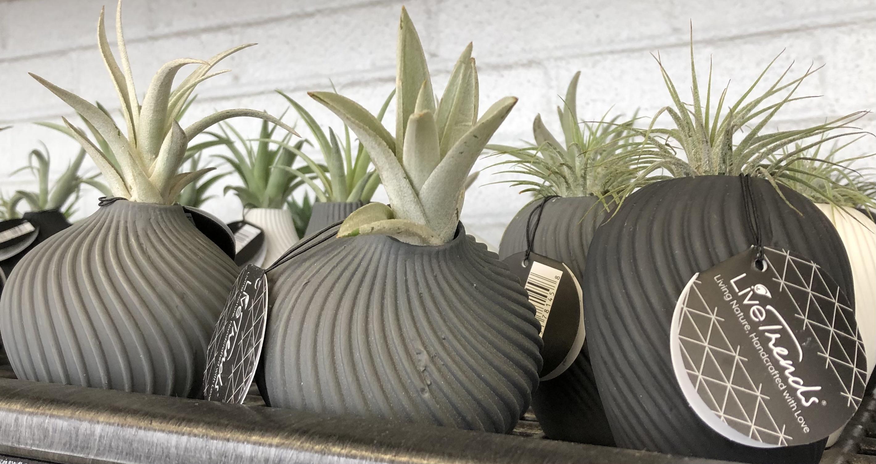 Photo: Mini Garden Center selection.