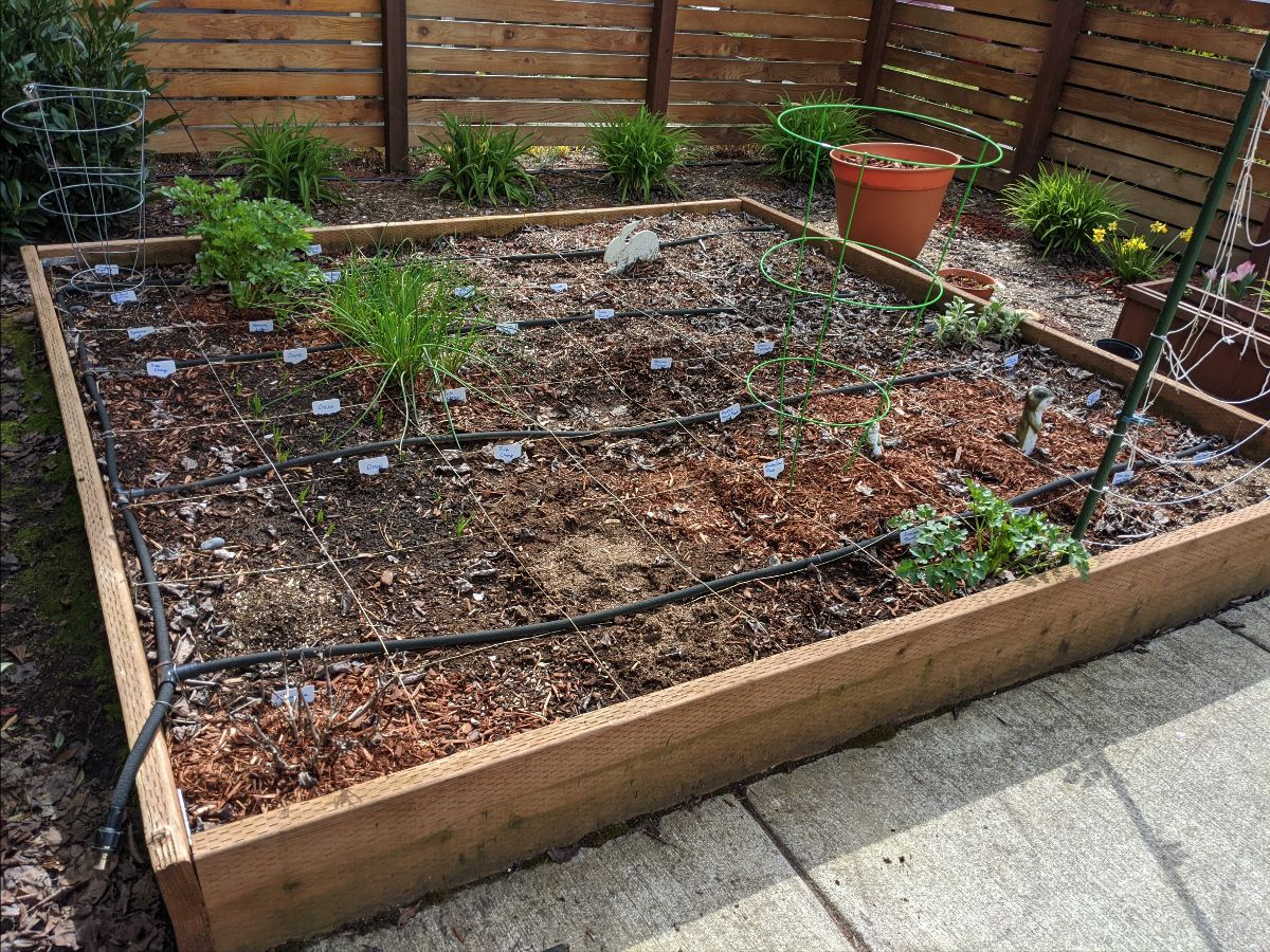 Southern garden bed - April 4, 2020