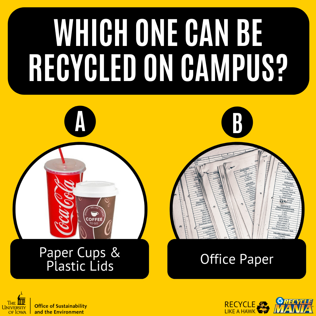 Which one can be recycled on campus? A: Paper Cups & Plastic Lids or B: Office Paper
