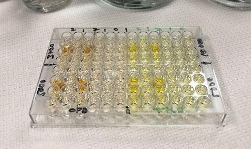 Array of vials of solution