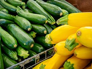 Zucchini or Yellow Squash