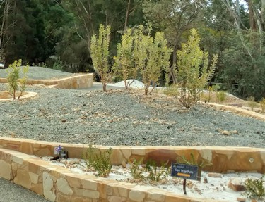 Banksia Garden, July 2020