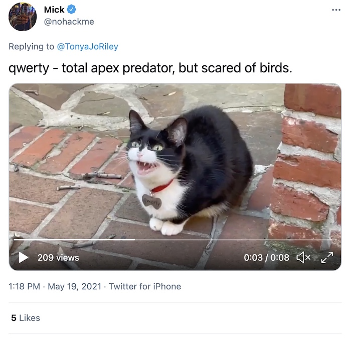 Click through for a video of a cat chattering.