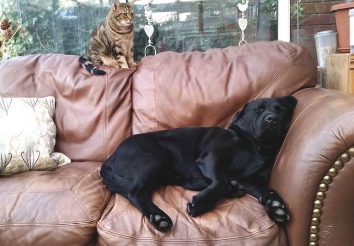 Eddie (dog) and Fatcat (cat)