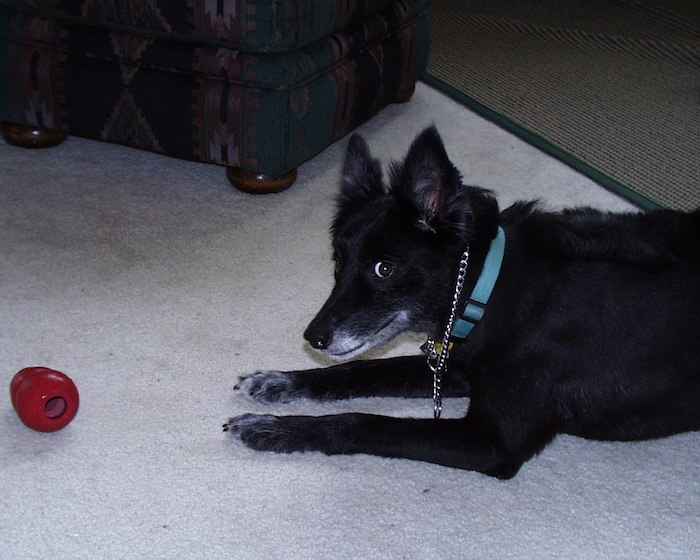 Dexter, a black dog.