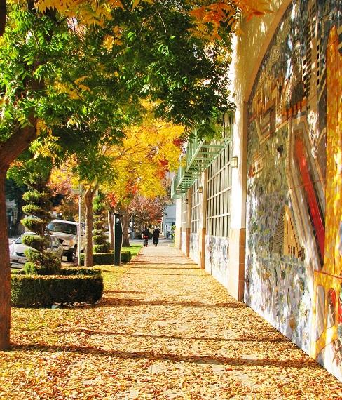 walkway and trees