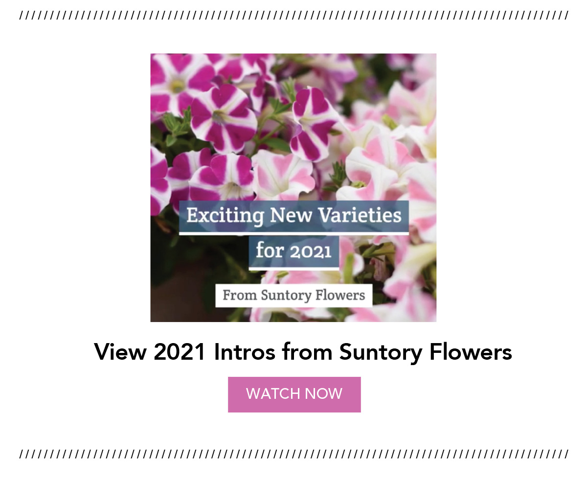 Video: 2021 Intros from Suntory Flowers