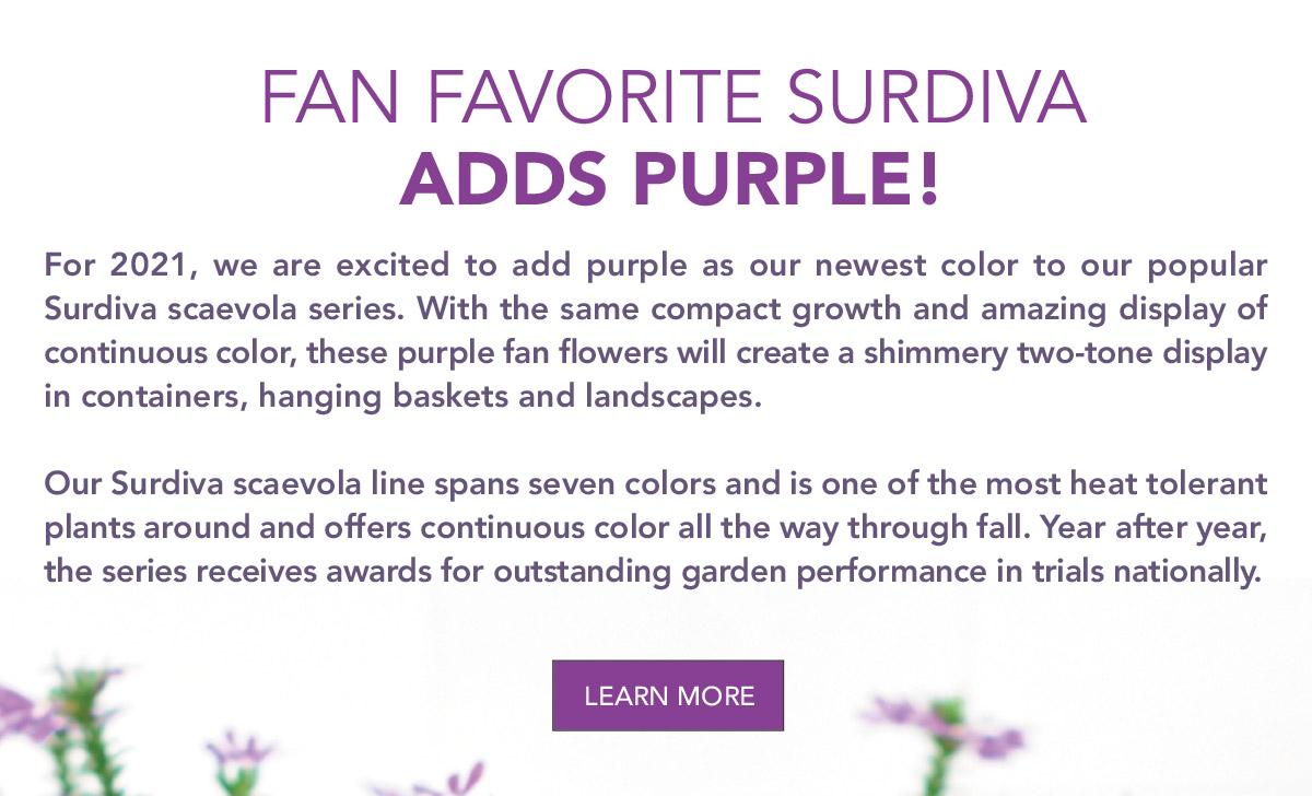 Fan Favorite Surdiva Adds Purple!